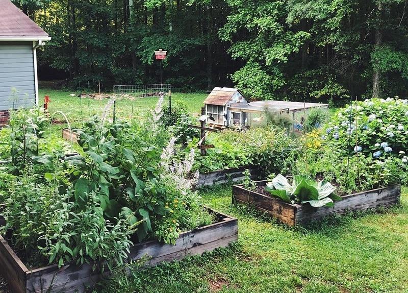 Turn Your Backyard Into A Best Urban Farm