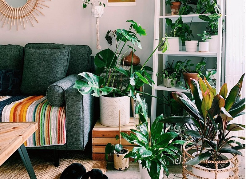 Grow Lively Houseplants To Boost Clean Atmosphere In Home